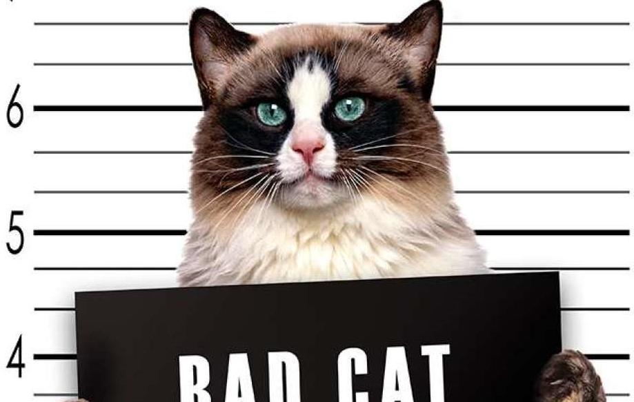 Кот с табличкой в лапах в тюрьме картинки